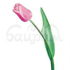 Цветы Тюльпаны 1 шт